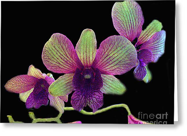 Greeting Card featuring the photograph Green And Maroon Orchids by Merton Allen