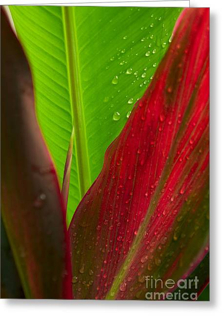 Green And Red Ti Plants Greeting Card