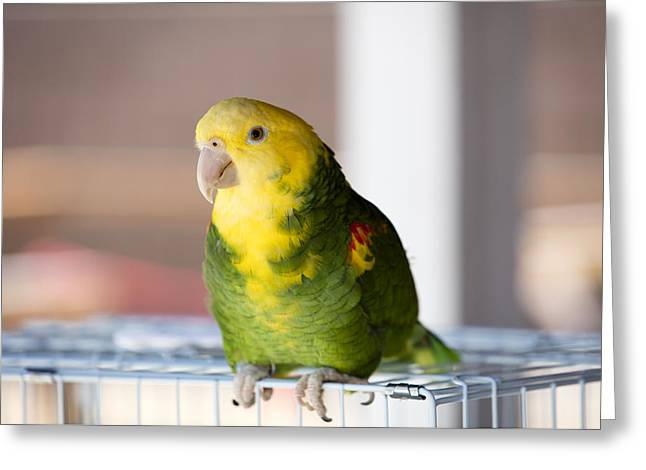 Green And Yellow Parrot At A Community Gathering Greeting Card