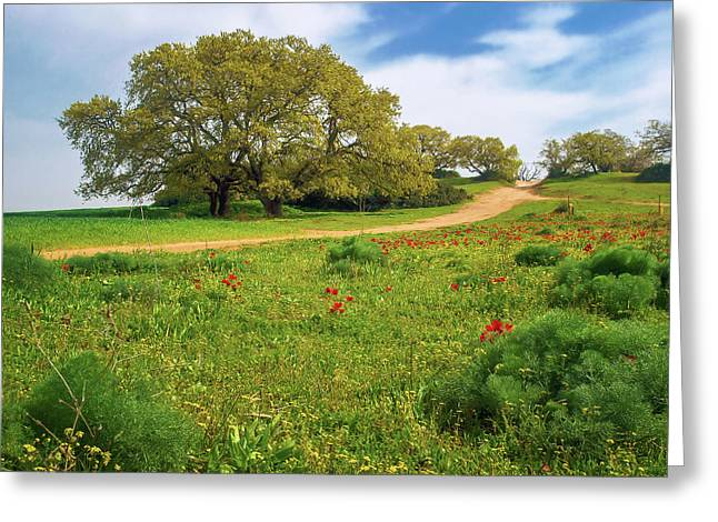 Green Fields Greeting Card by Meir Ezrachi
