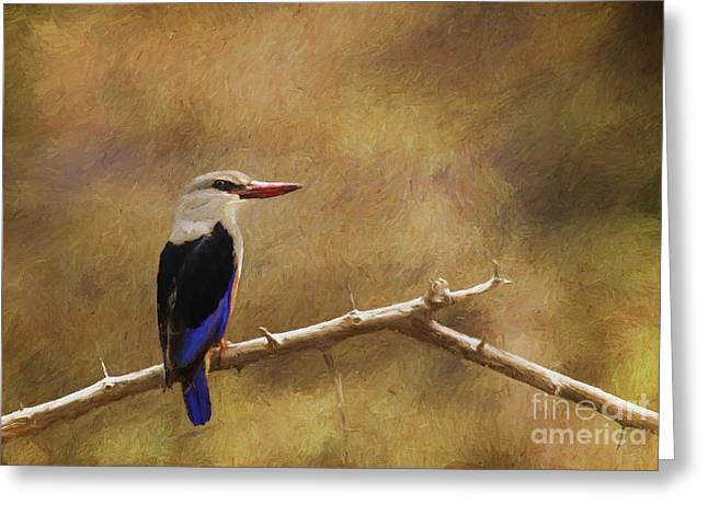 Grey-headed Kingfisher  Halcyon Leucocephala Greeting Card by Liz Leyden