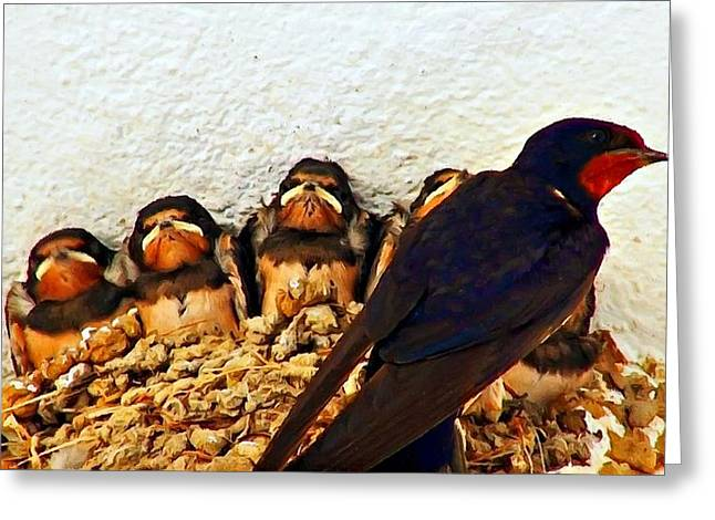 Group Of Young Swallows In The Nest Digitally Painted Greeting Card by Ken Biggs