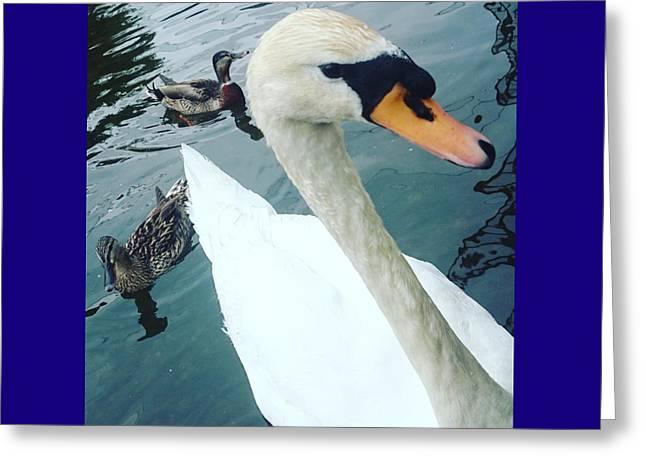Hakucho Means Swan  Greeting Card