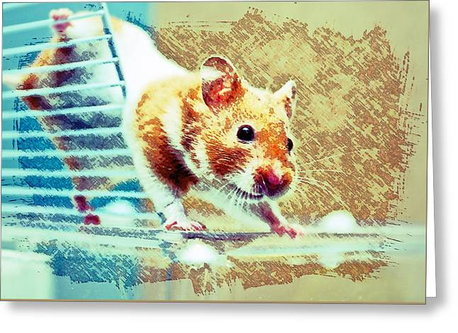 Hamster Greeting Card by Tom Gowanlock