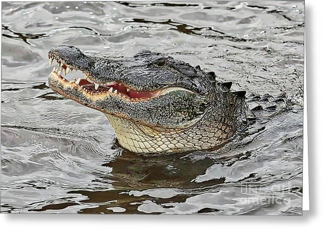 Happy Florida Gator Greeting Card by Carol Groenen