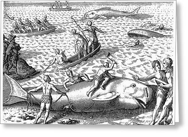 Harpooning Whales, C1590 Greeting Card by Granger