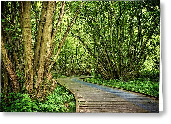 Hatfield Forest Greeting Card by Martin Newman