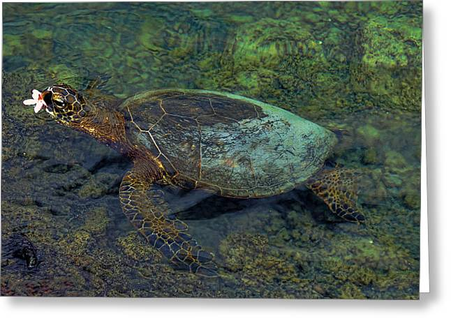 Hawaiian Sea Turtle Greeting Card