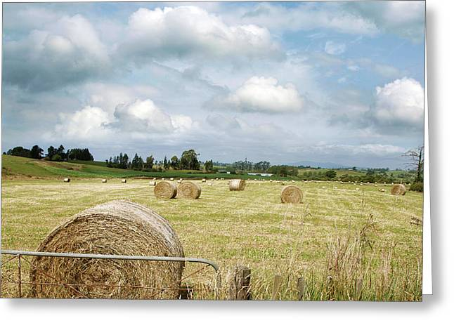 Hay Bales Greeting Card by Les Cunliffe