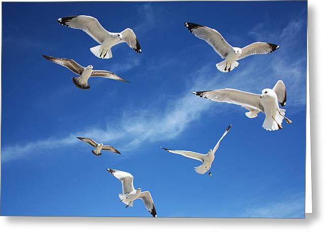 Heavenly Seagulls Greeting Card