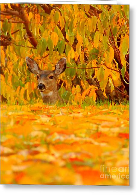 Hello Greeting Card by Scott Gould