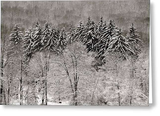 Hemlocks Over Whaley Lake  Greeting Card by Jeremy Wolff