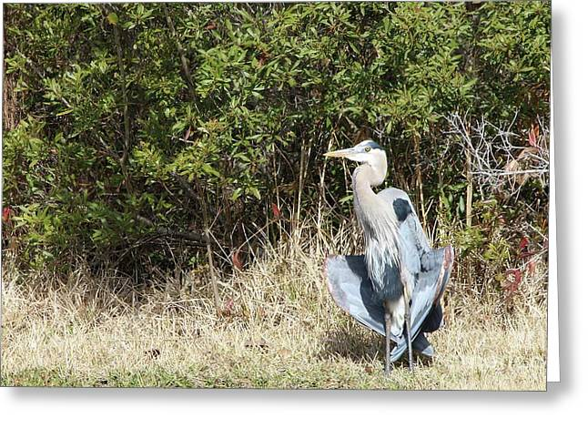 Greeting Card featuring the photograph Henry The Heron by Benanne Stiens