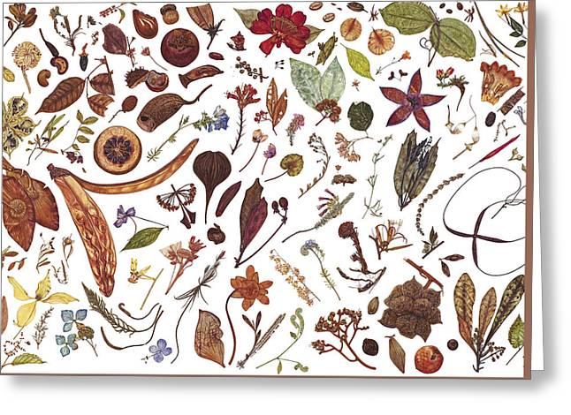 Herbarium Specimen Greeting Card by Rachel Pedder-Smith
