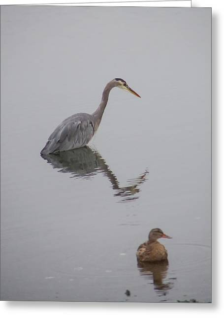 Heron And Friend Greeting Card