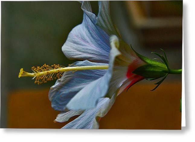 Hibiscus Stigma. Greeting Card by Andy Za