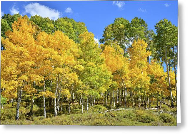 Greeting Card featuring the photograph High Country Aspens by Ray Mathis