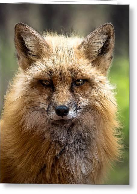 High Maintenance Fox Greeting Card by A O Tucker