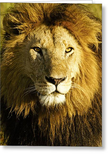 His Royal Highness Greeting Card by Michele Burgess