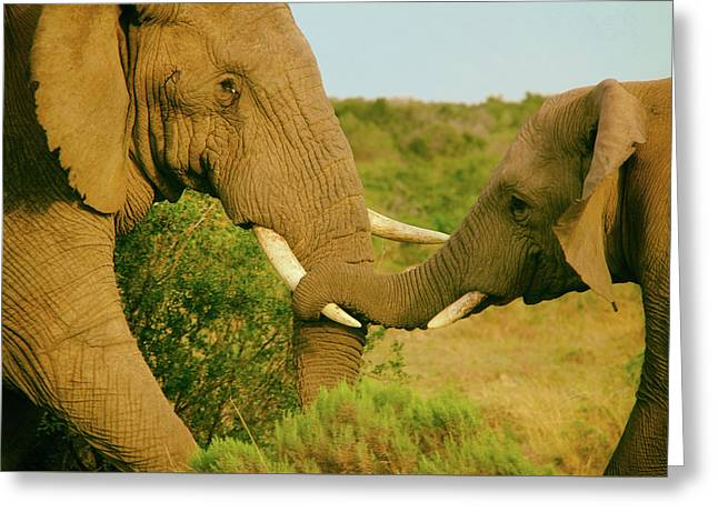 Holding Onto Mom Greeting Card by Pierse Stevens
