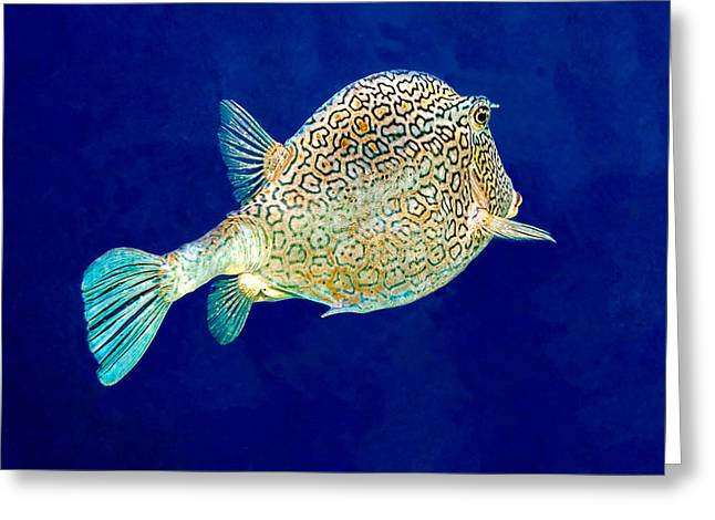 Greeting Card featuring the photograph Honeycomb Cowfish by Perla Copernik