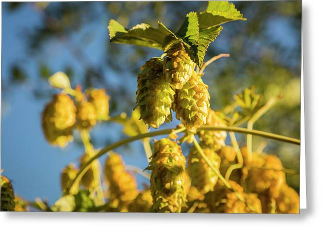 Greeting Card featuring the photograph Hops by Mark Mille