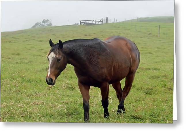Horse In The Fog Greeting Card