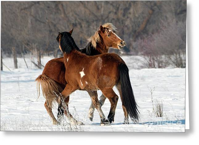 Greeting Card featuring the photograph Horseplay by Mike Dawson