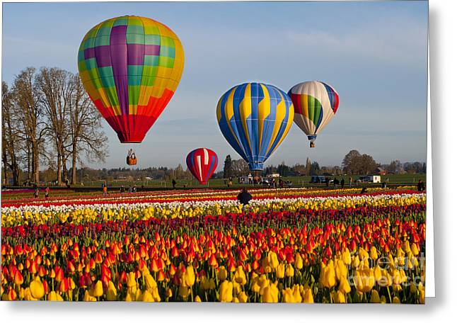 Hot Air Balloon Launch Greeting Card by Mandy Judson