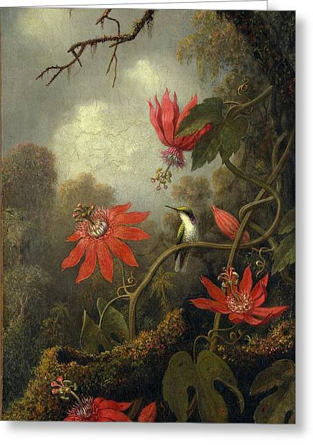 Hummingbird And Passionflowers Greeting Card by Martin Johnson Heade