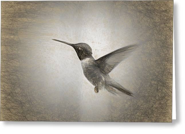 Hummingbird In Charcoal Greeting Card by Janice Rae Pariza