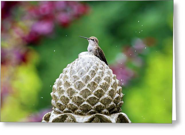 Hummingbird On Garden Water Fountain Greeting Card by David Gn