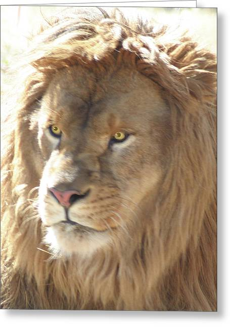 I Am .. The Lion Greeting Card