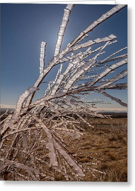 Ice Crystals On Tree Branches, Iceland Greeting Card