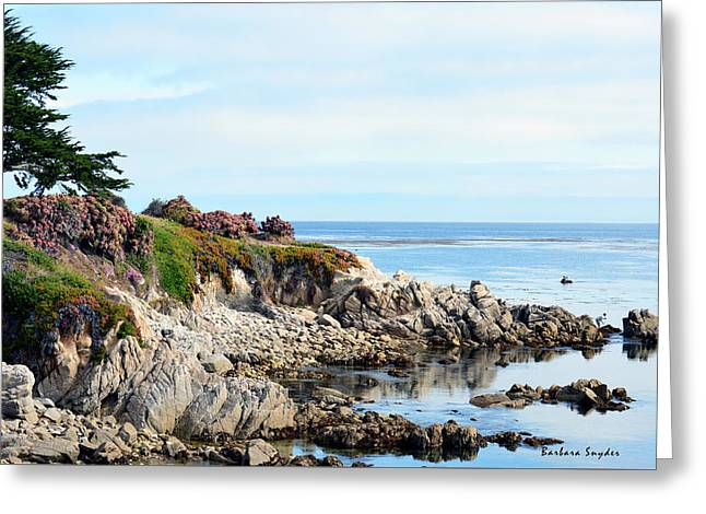 Ice Plant Along The Monterey Shore 2 Greeting Card by Barbara Snyder
