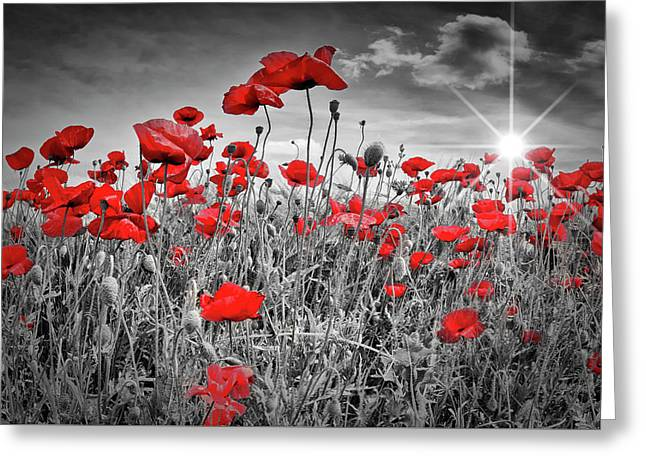 Idyllic Field Of Poppies With Sun Greeting Card by Melanie Viola