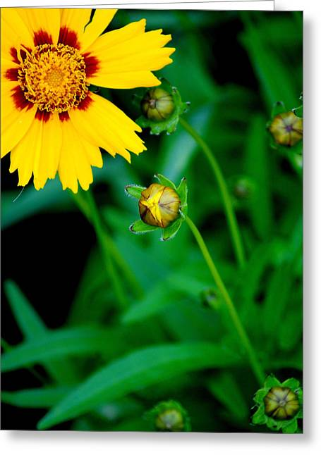 Illumination Greeting Card by Frozen in Time Fine Art Photography