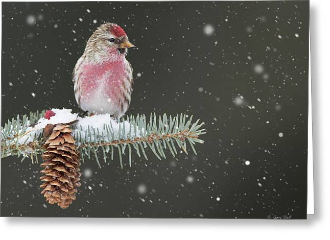 Greeting Card featuring the photograph I'm Not So Common by Gerry Sibell
