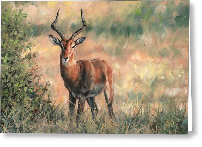 Impala Greeting Card