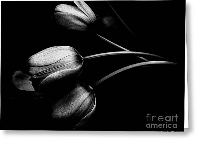 Incognito Greeting Card by Elfriede Fulda
