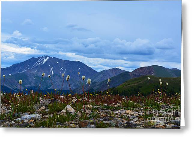 Greeting Card featuring the photograph Independence Pass by Kate Avery