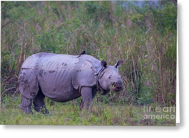 Indian Rhinoceros, India Greeting Card by B. G. Thomson