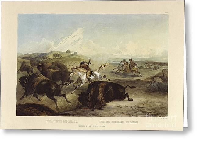 Indians Hunting The Bison Greeting Card
