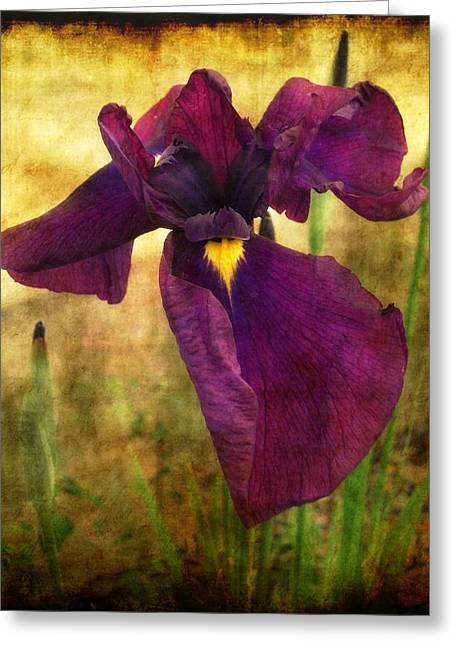 Iris Digital Art Greeting Cards - Iris Greeting Card by Cathie Tyler