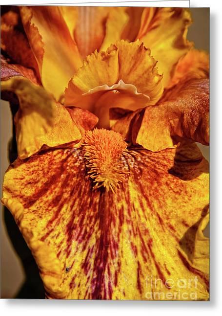 Iris Macro Greeting Card by Robert Bales