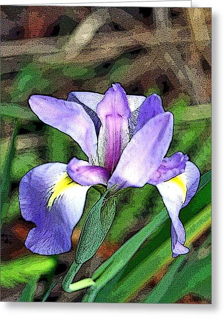 Greeting Card featuring the photograph Iris by Rosemary Aubut