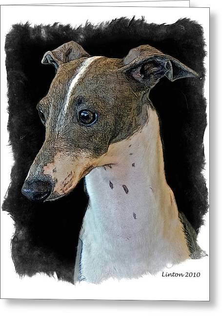 Italian Greyhound Greeting Card by Larry Linton