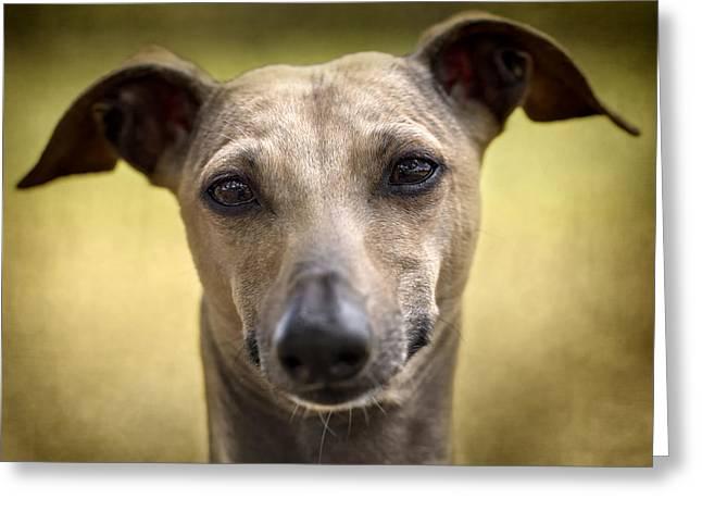 Italian Greyhound Portrait 2 Greeting Card