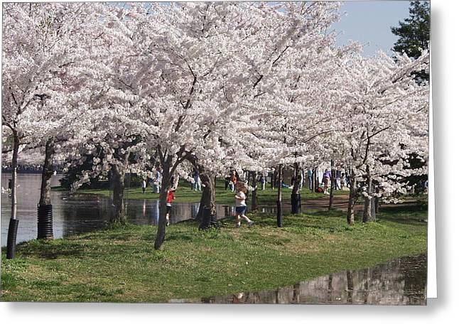 Japanese Cherry Blossom Trees Greeting Card by April Sims