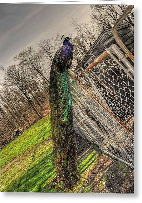 Best Sellers -  - Farm Stand Greeting Cards - Jimmy Stands Guard  Greeting Card by Chris Fleming